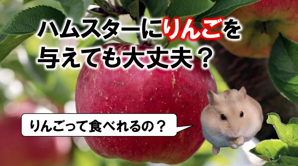 りんご ハムスター